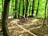 ondrysfoto_-_downhill_93_